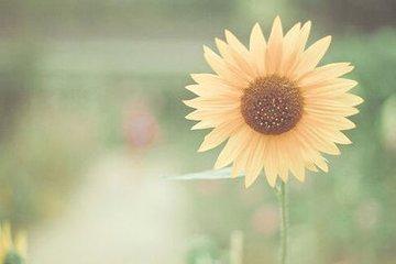 关于幸福的说说心情短语 超拽