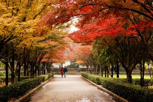 河南科技大学2018年新生学费及助学贷款奖学金申请政策